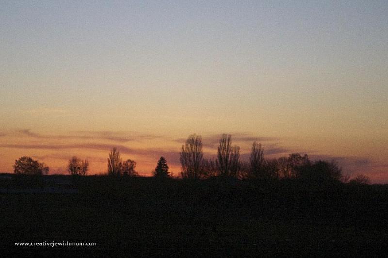 Bare trees on horizon gray