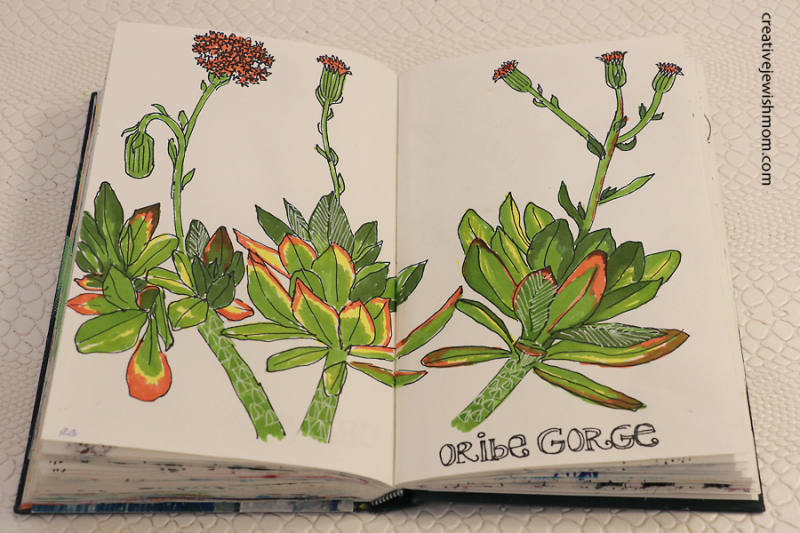 Drawing-succulents-in-art-journal
