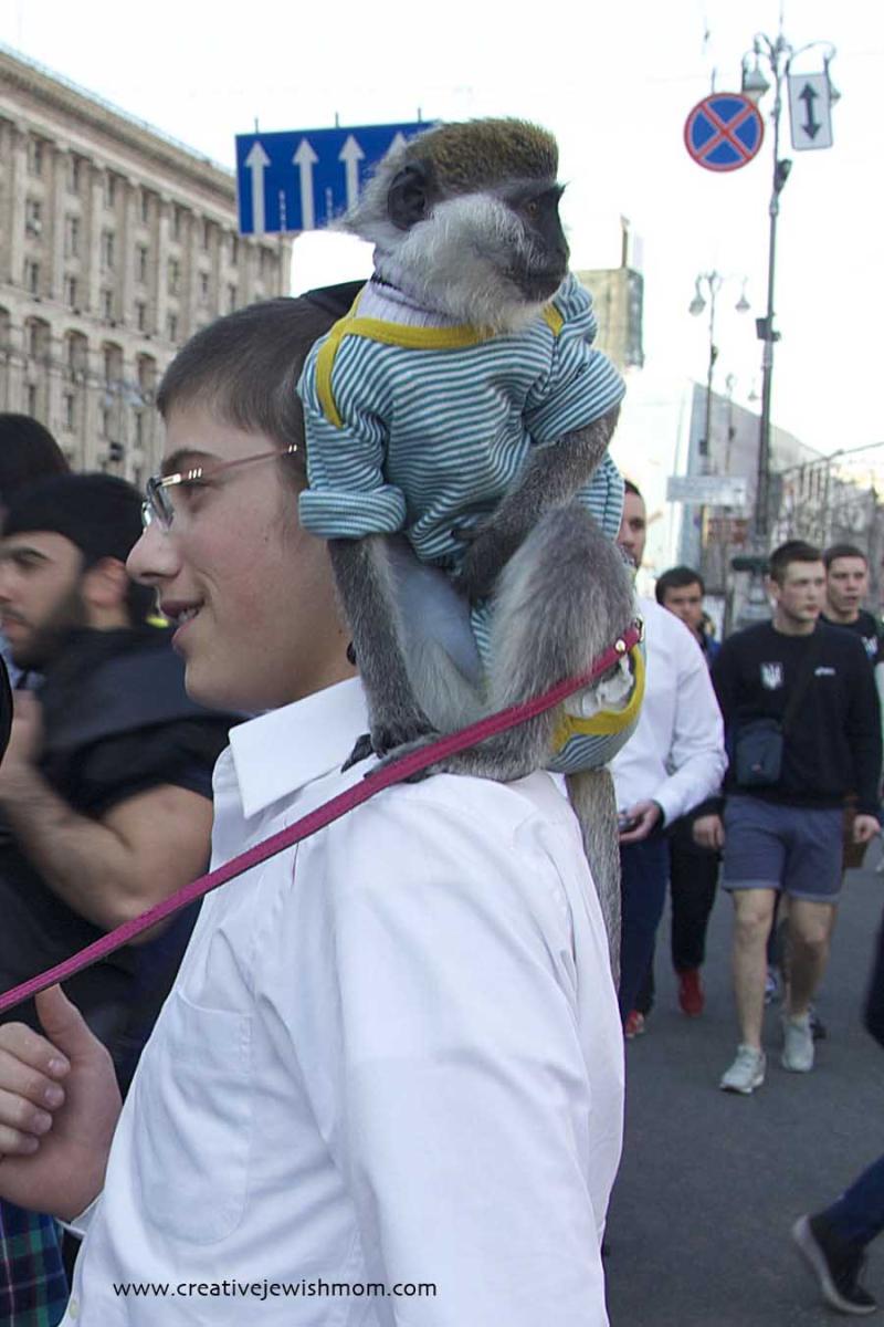 Ukraine  kiev street monkey