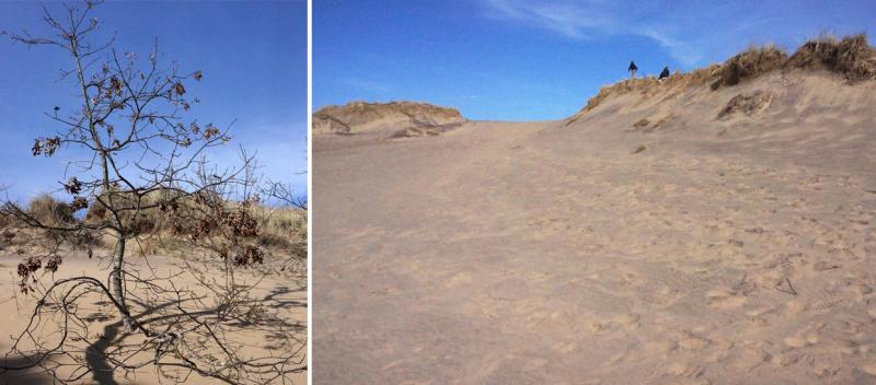 The walking dunes Montauk