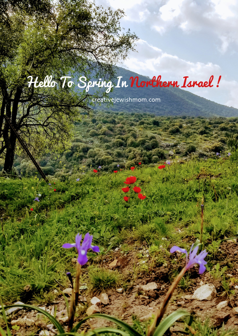 Israel irises and red poppies spring