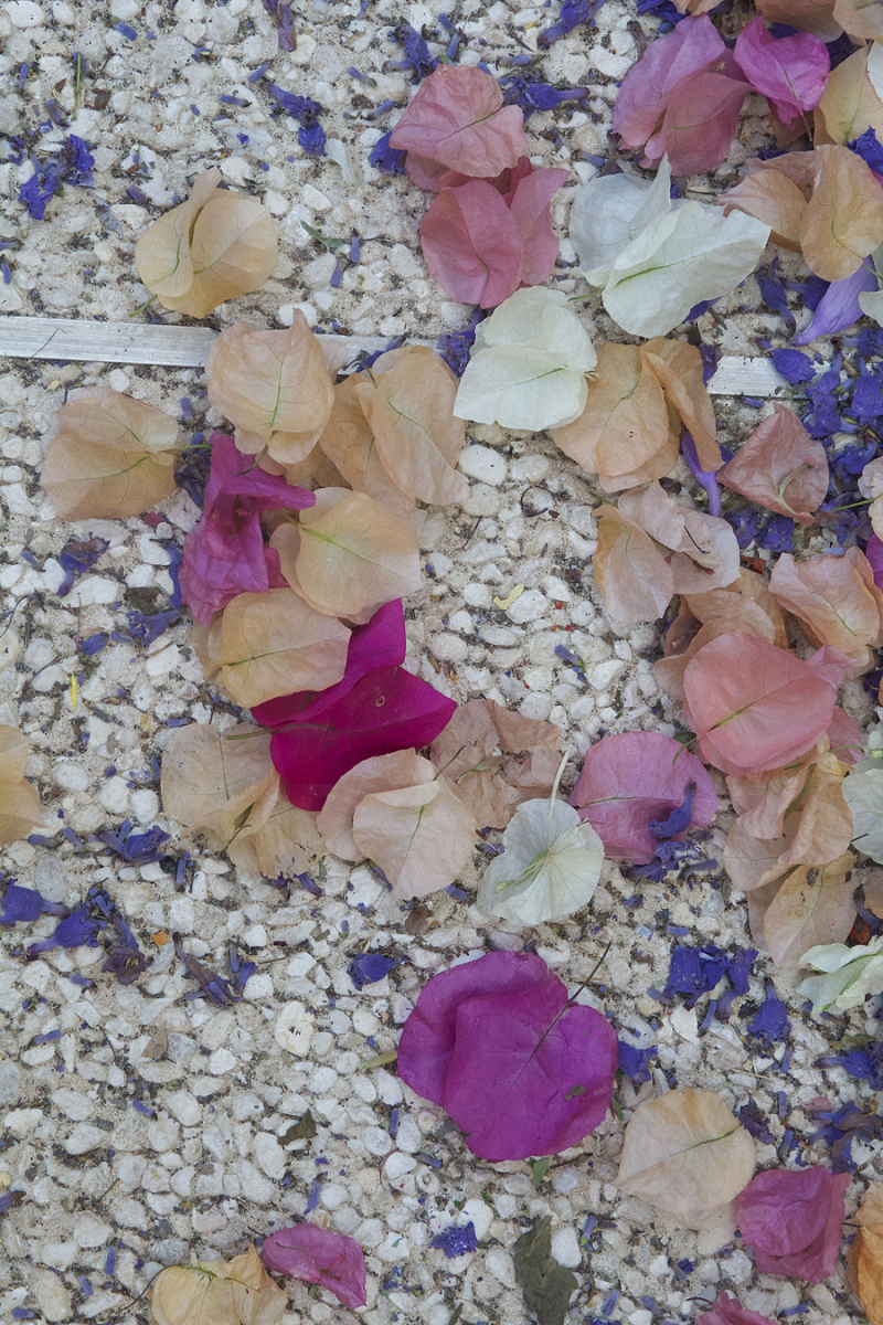 Bougainvillea-petals-on-ground