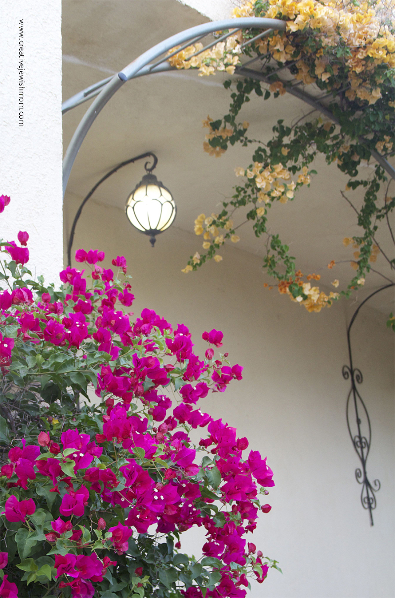 How-to-support-bougainvillea