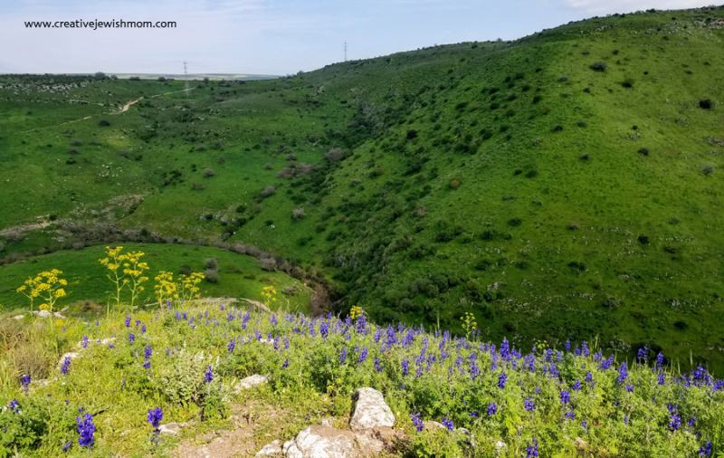 Israel irises and red poppies