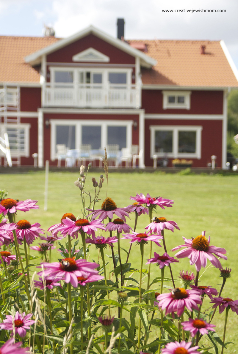 Swedish-farm-with-cone-flowers