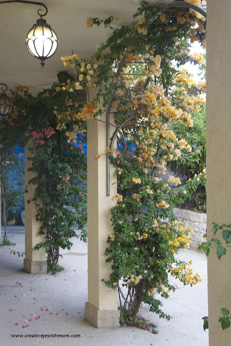 Bougainvillea-orange-petals-on-arches