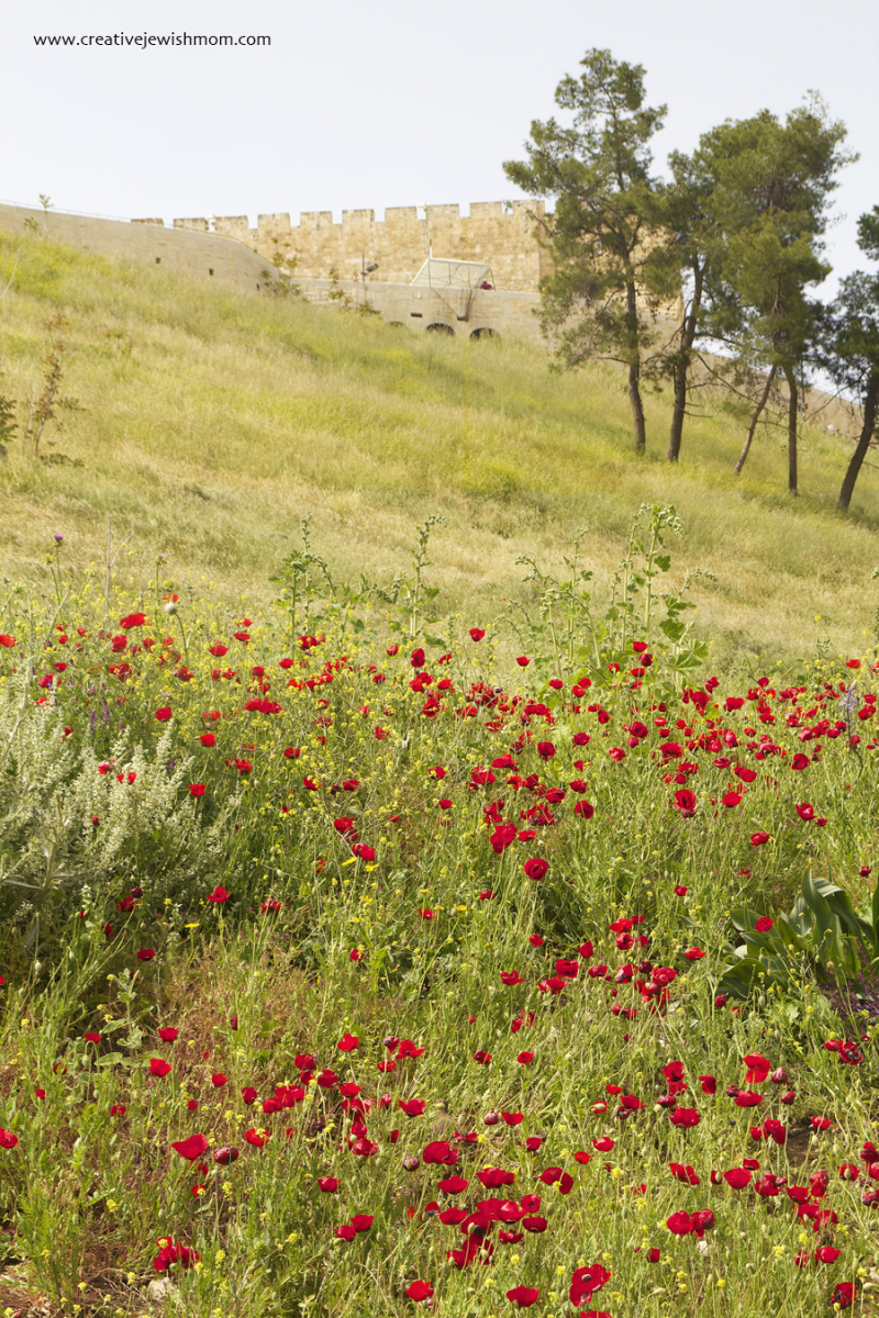 Jerusalem-poppies-kidron-valley-with-old-city-wall
