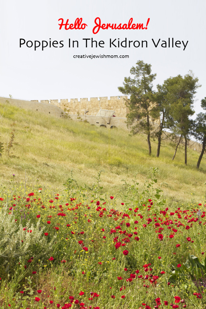 Kidron-Valley-Red-Poppies-Israel