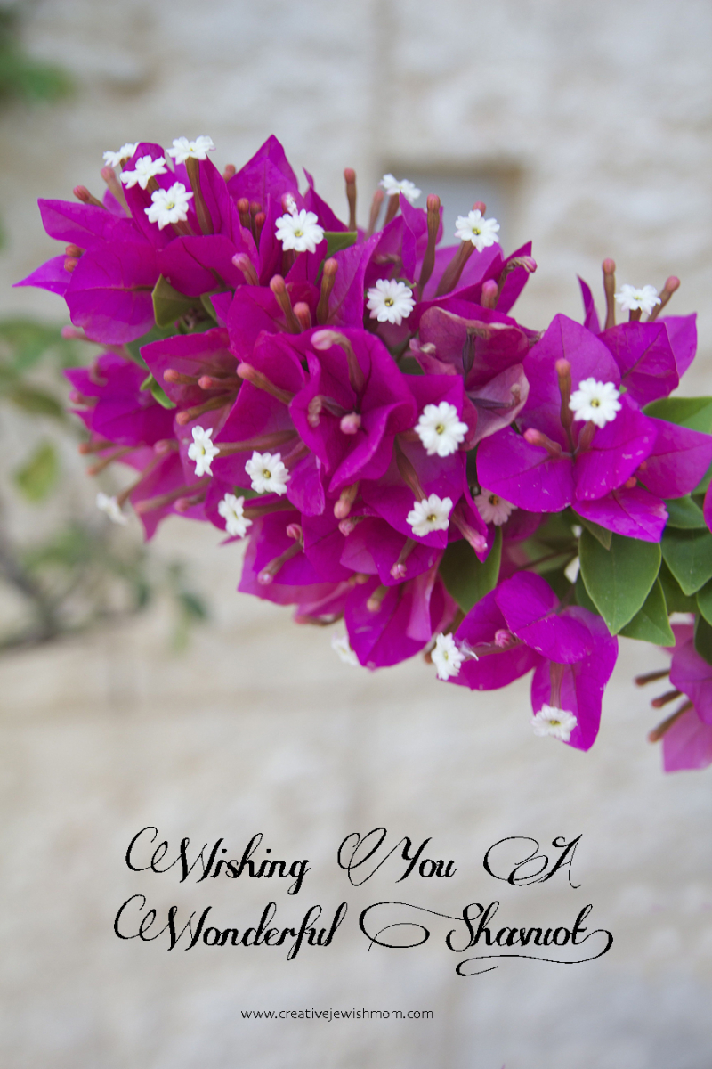 Bougainvillea for shavuos