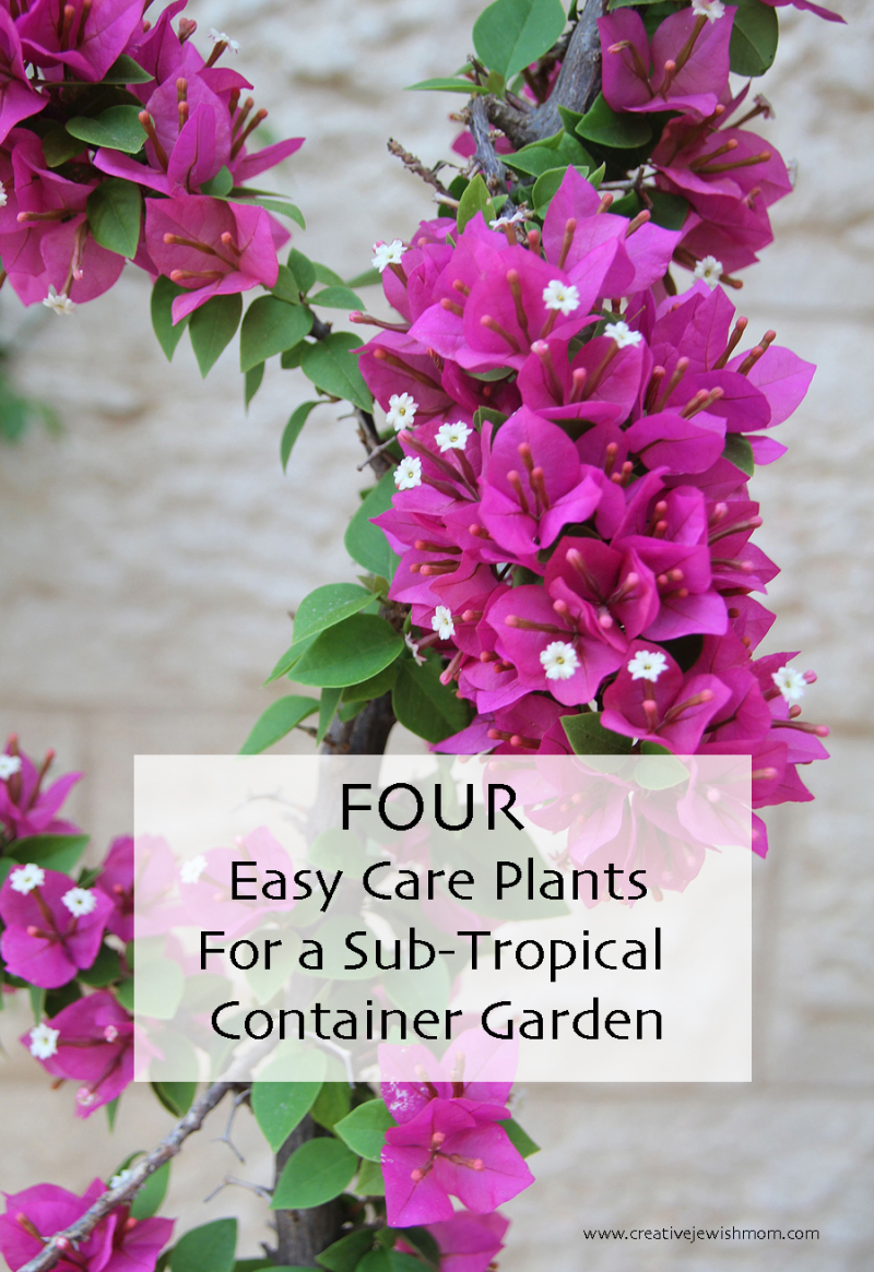 Easy-care-flowering-plants-sub-tropical