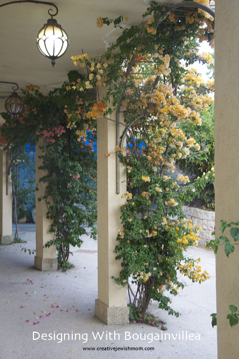 Bougainvillea-arches-garden-design