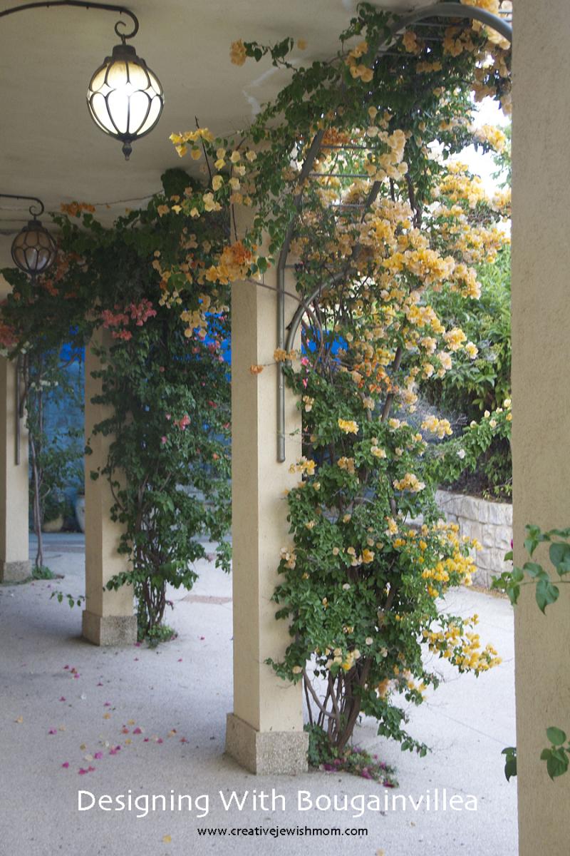 Bougainvillea-arches-garden-design
