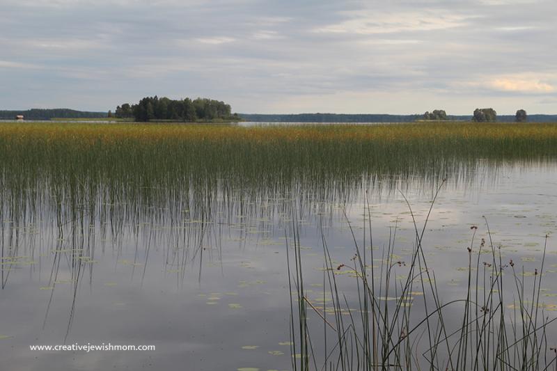 Sweden Reed In River Albo
