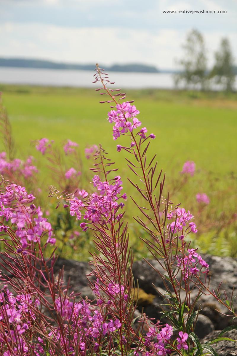 Sweden Dalalven Pink Stalk Flowers