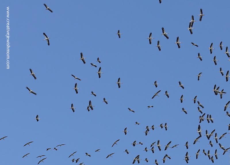 Cranes-migratory-path-Spring