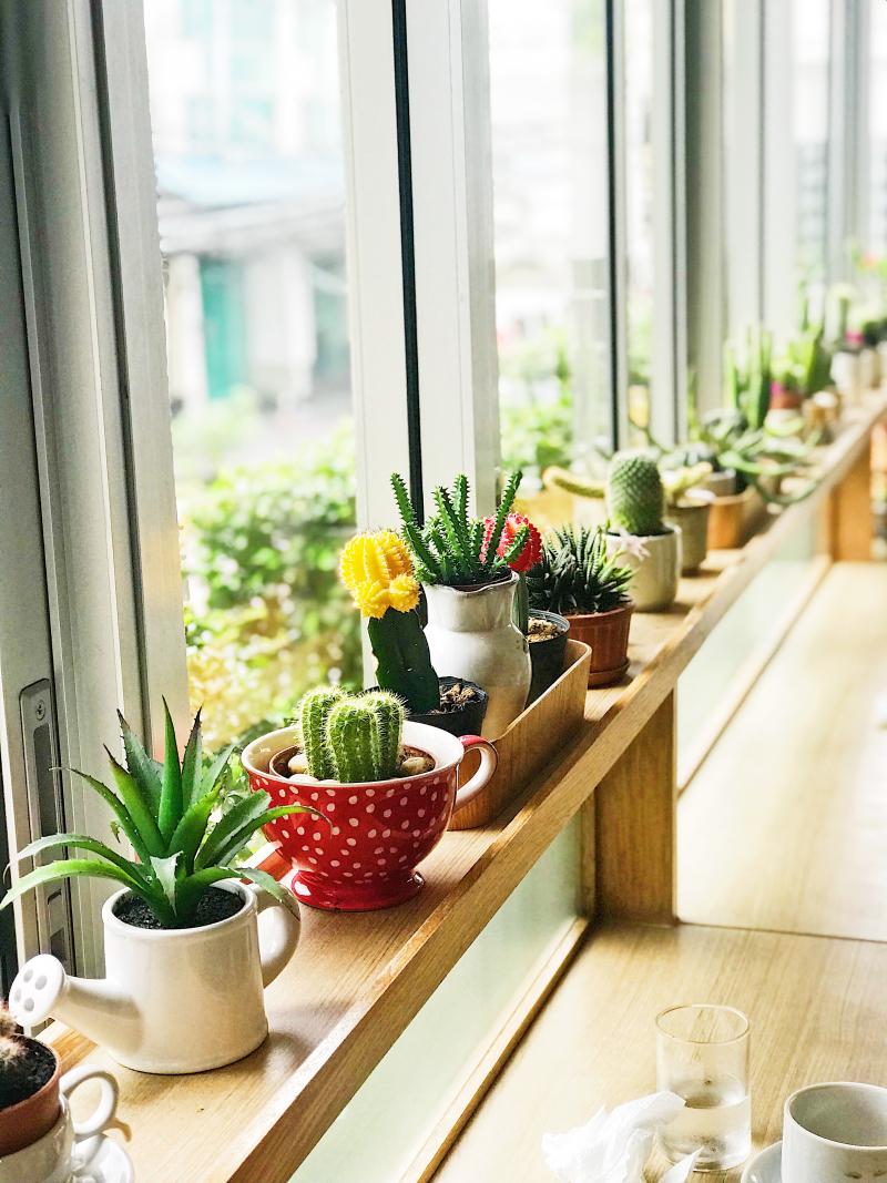 Interior cactus in window
