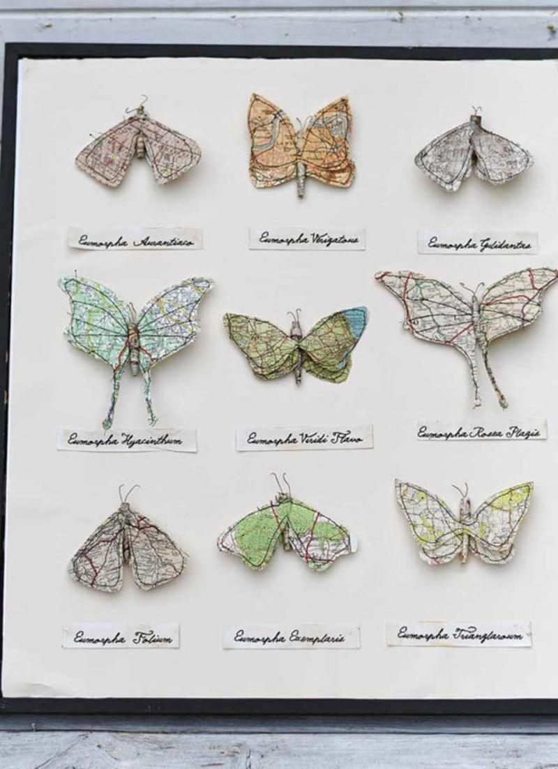 Framed-map-paper-moths
