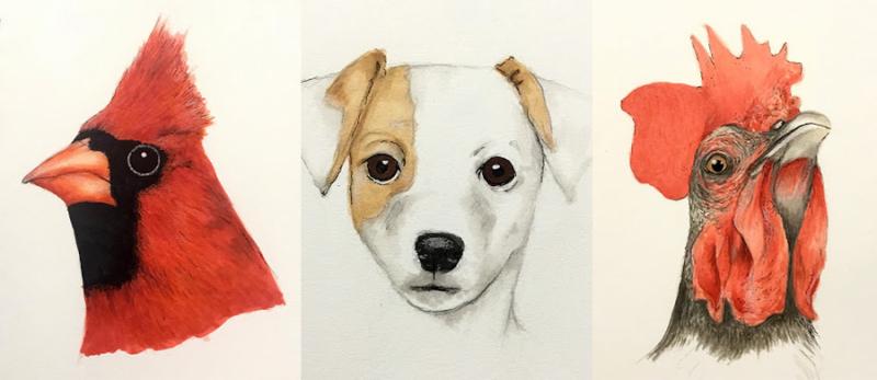 Sketchbook-animals