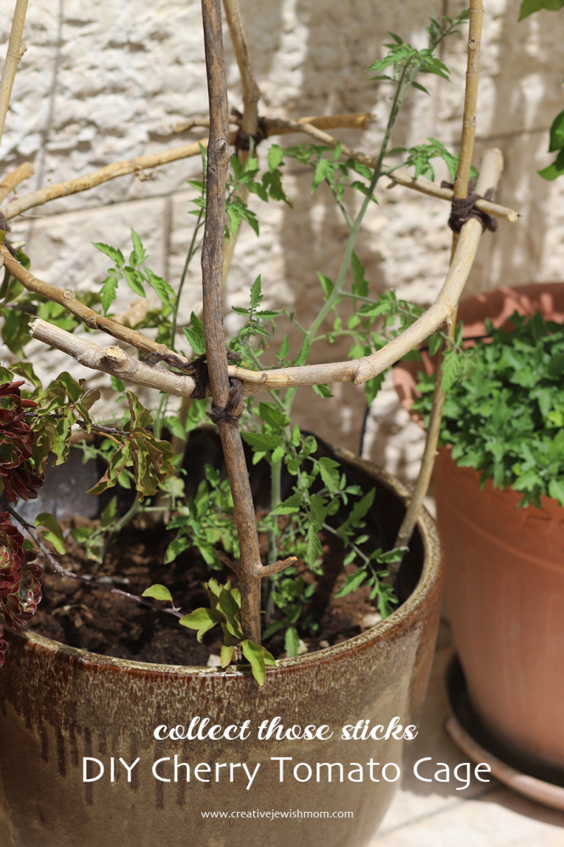 DIY-tomato-cage-from-sticks