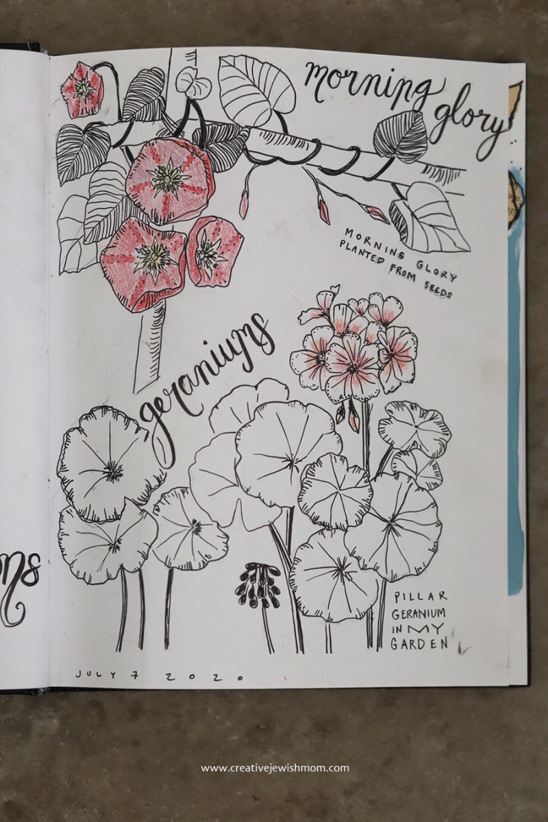 Sketchbook-floral-drawings-from-my-own-photos