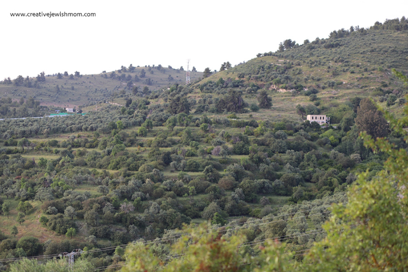 Northenr-Israel-Mt.-Meron-and-forrest