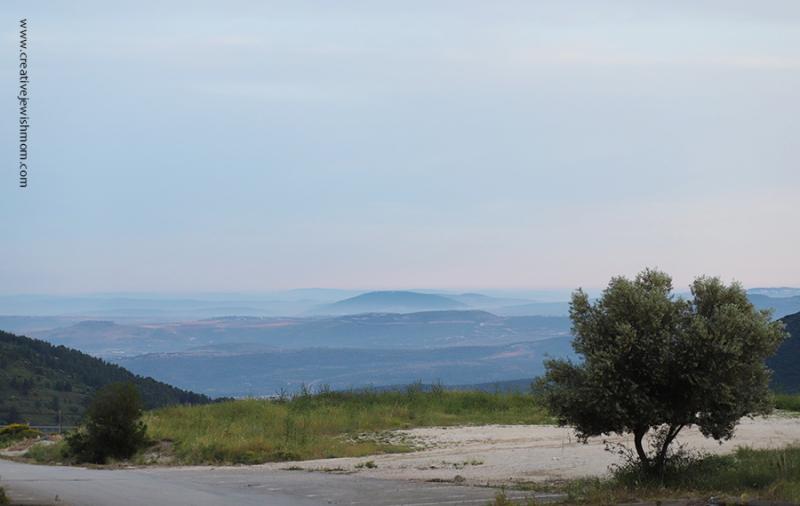 Northern-Israel-old-olive-tree