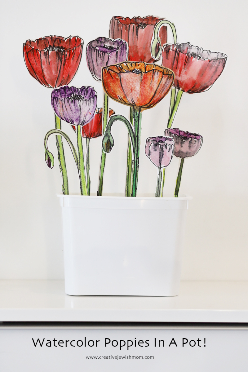 Watercolor-and-ink-poppies-in-a-pot