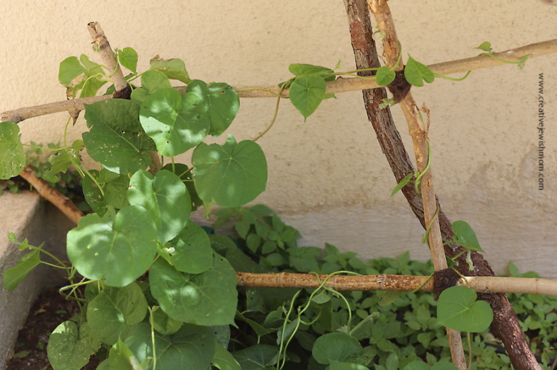 DIY-garden-trellis-from-sticks