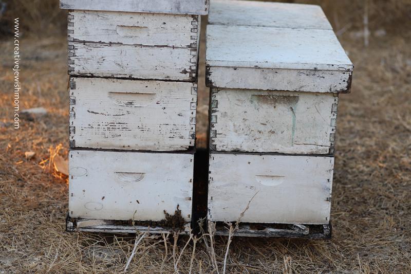 Bee hives-Israel-Tsfat-near-wadi
