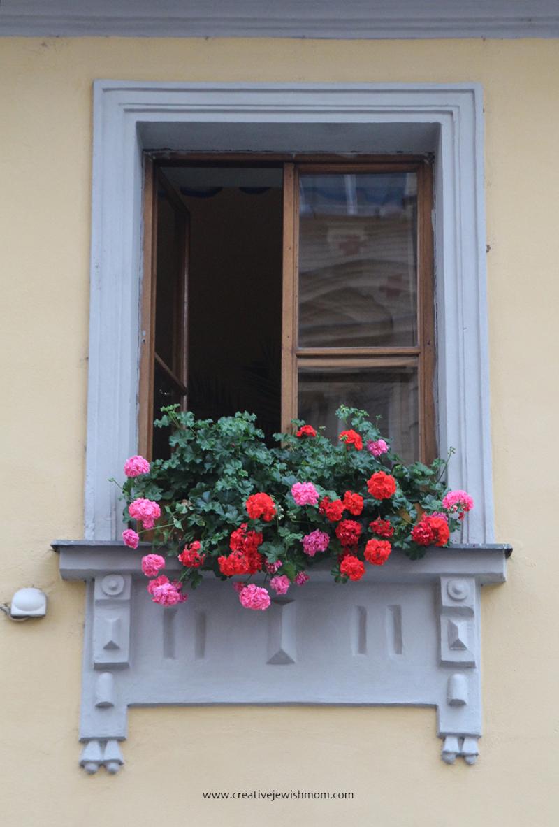 Prague-canal-houses-geraniums