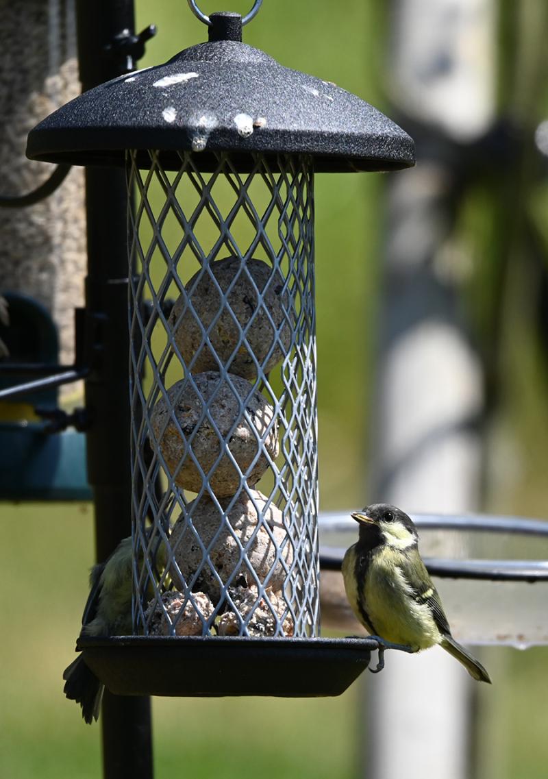 DIY-birdseed-balls
