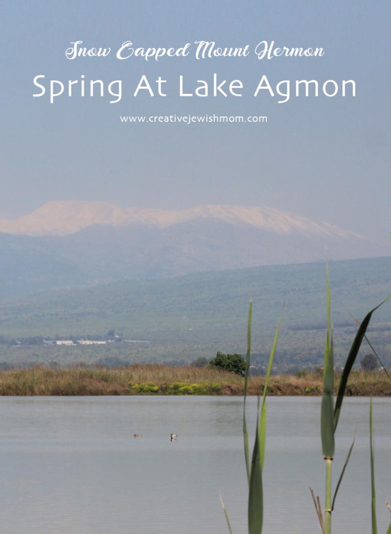 Israel-lake-agmon-2021