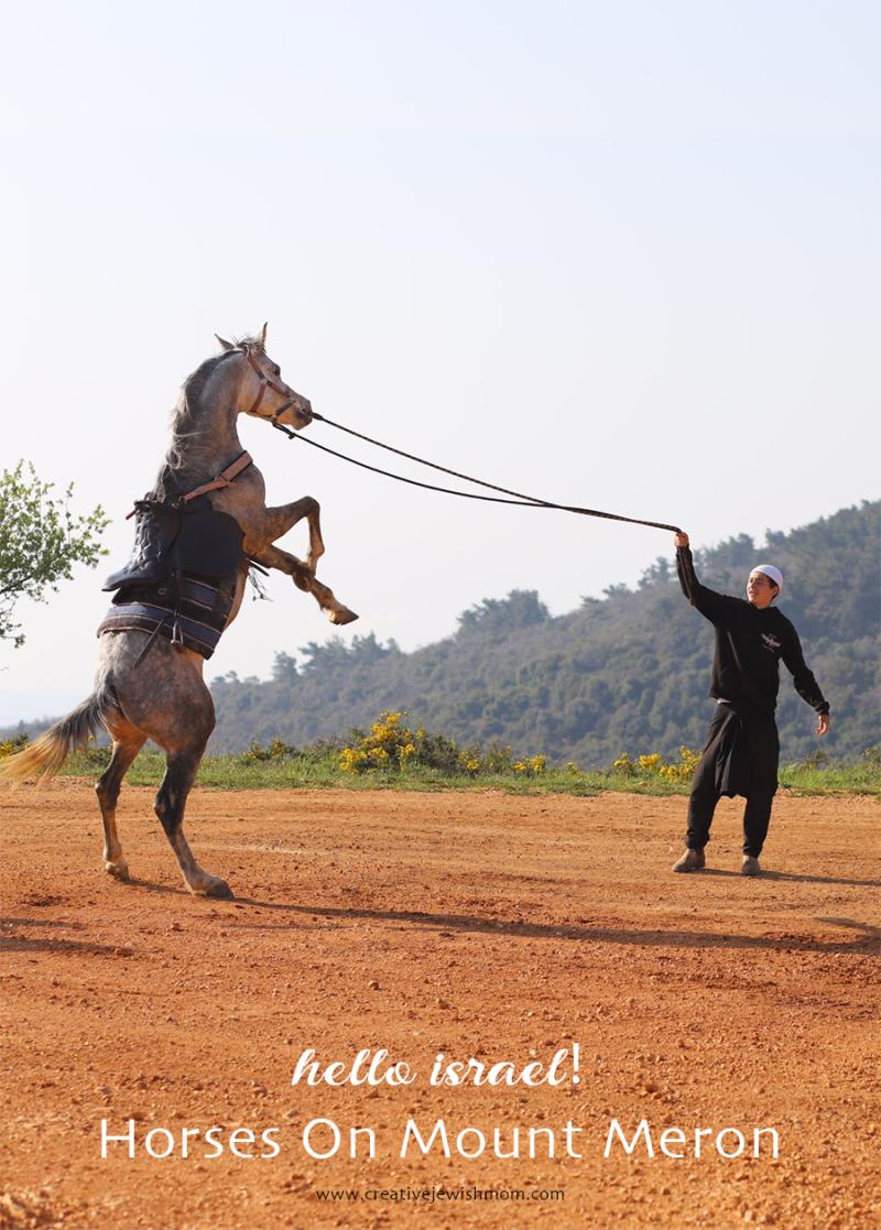 Israel-meron-rearing-horse