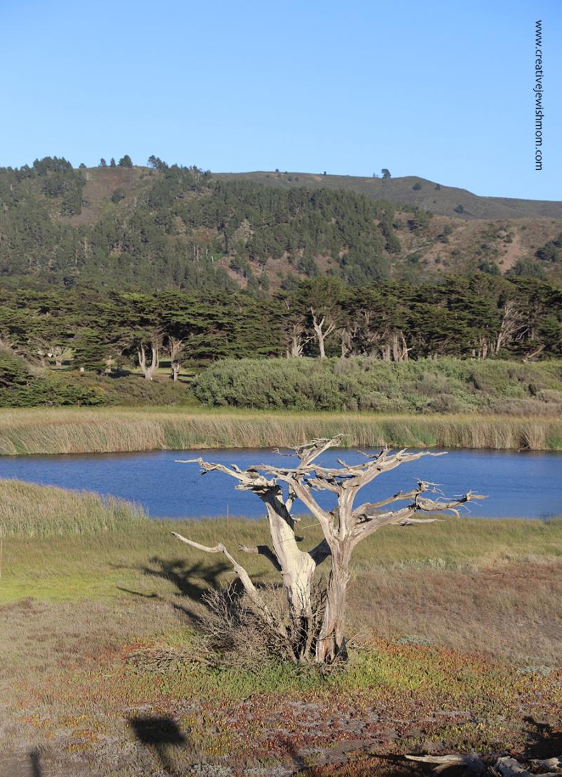 Pacifica-sharp-park-ecosytem-marsh