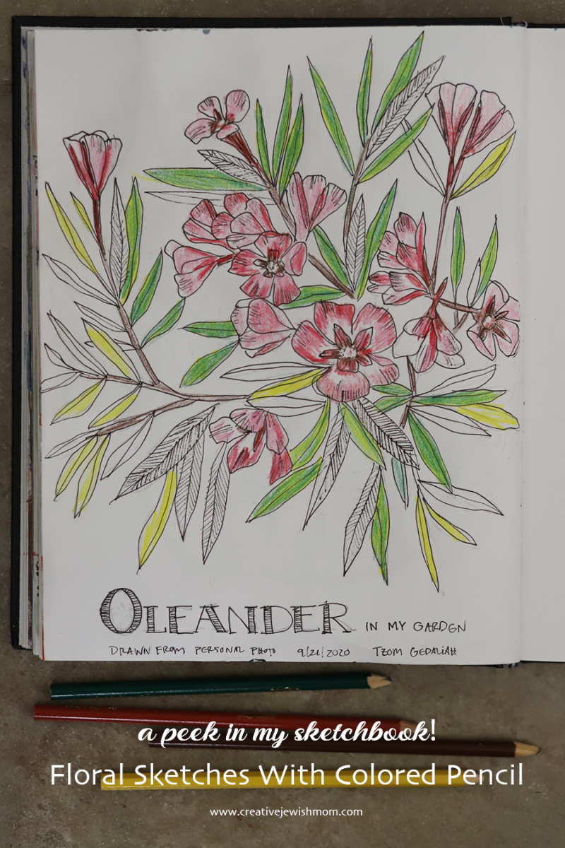 Sketchbook-floral-drawing-with-ink-colored-pencil