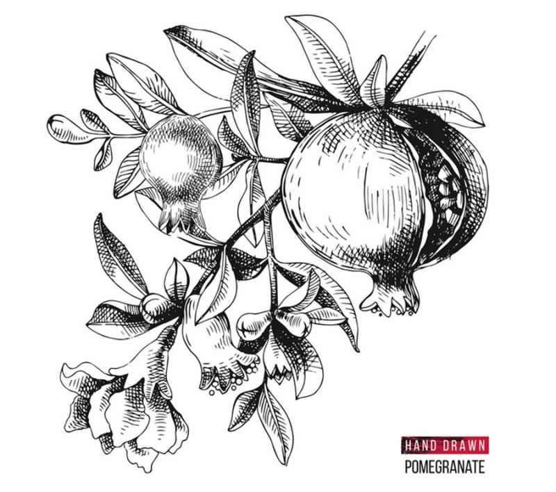 Pomegranite-drawing