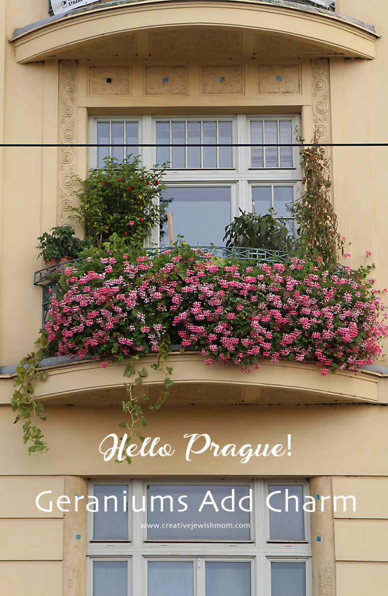Prague-pink-geraniums-balcony