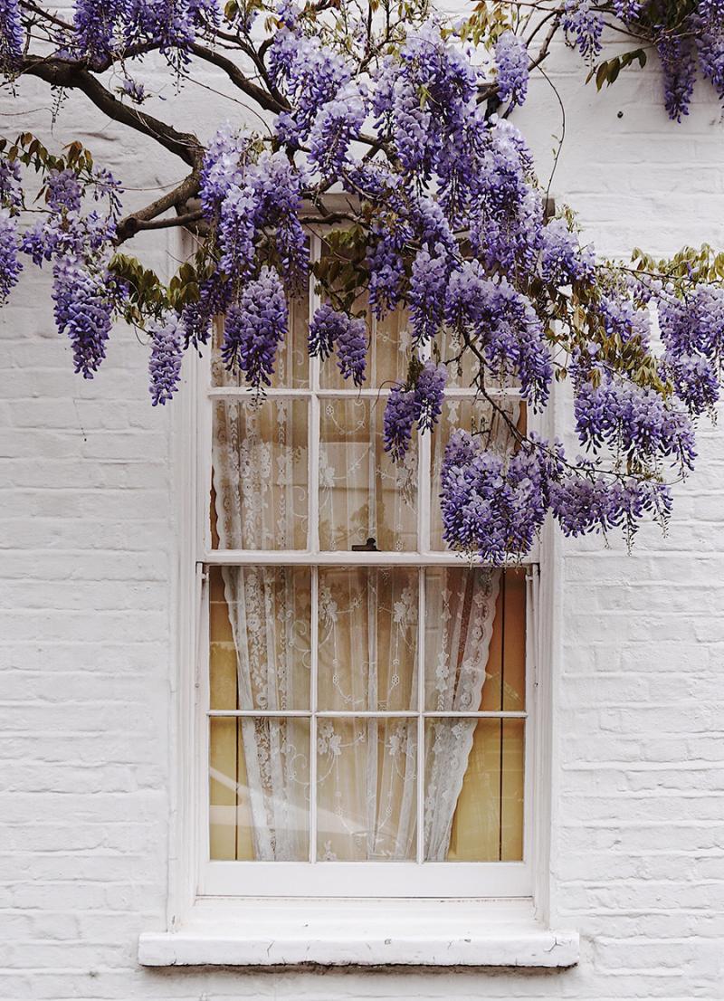 Home-window-wisteria