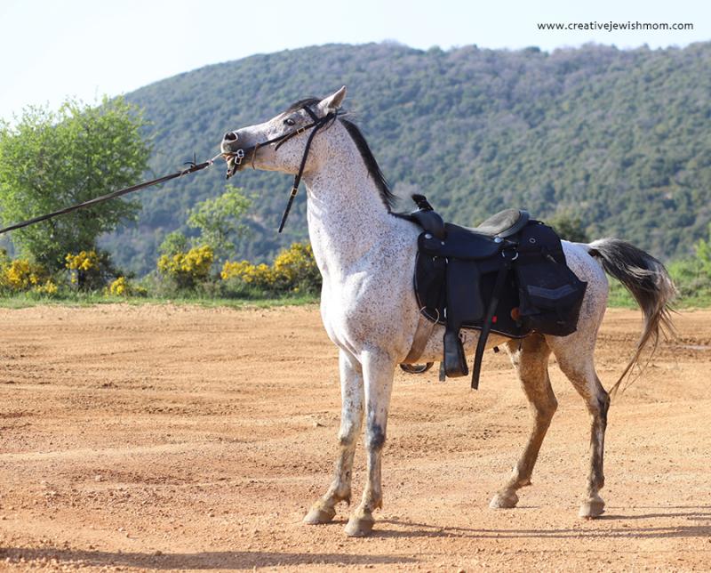 Israel-meron-horses-man
