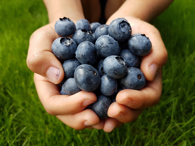 Kids-cooking-blue-berries