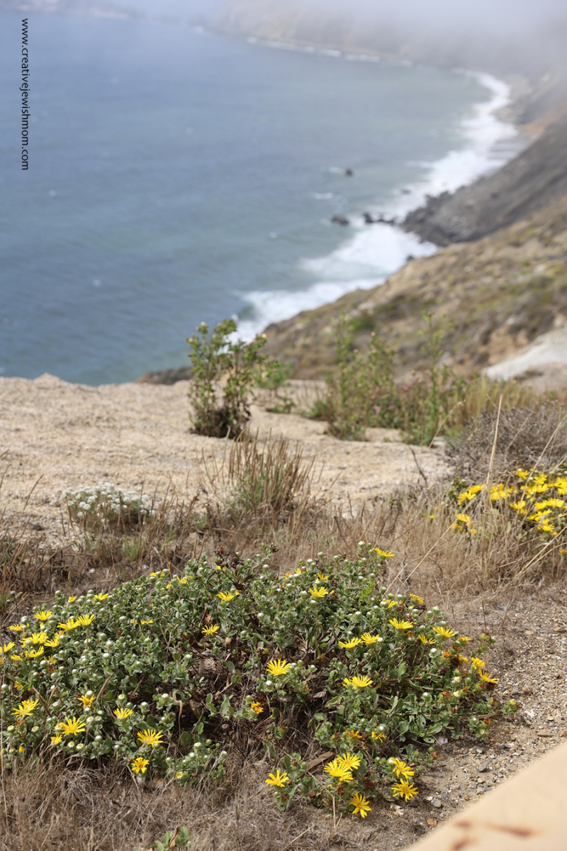 Pacifica-Devils-Slide-view-pedro-point