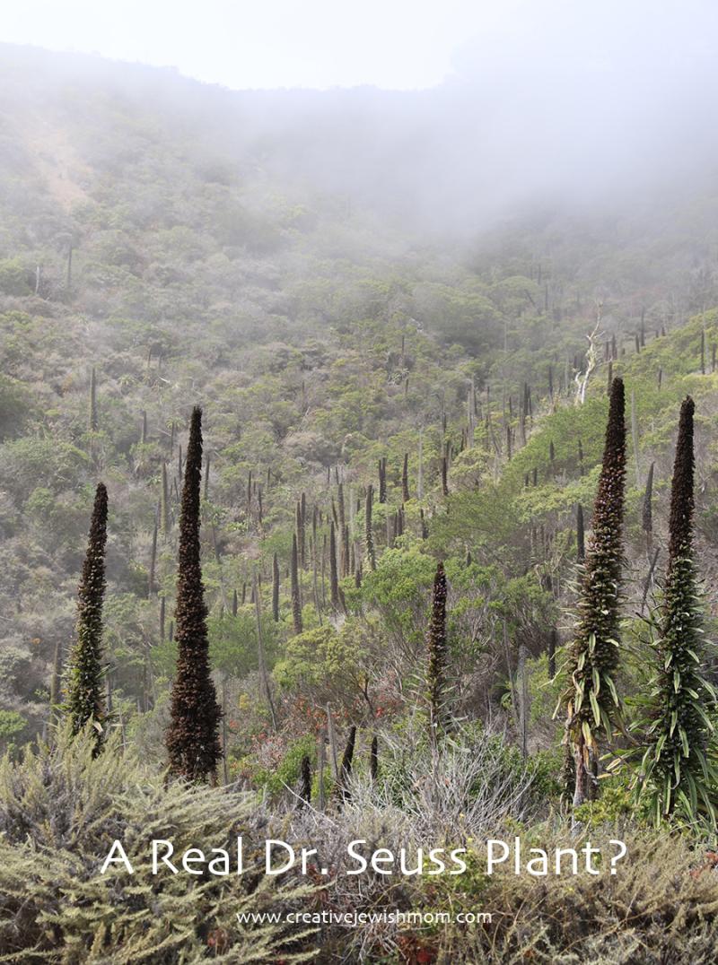 Pacifica-devils-slide-dr.-seuss-plant