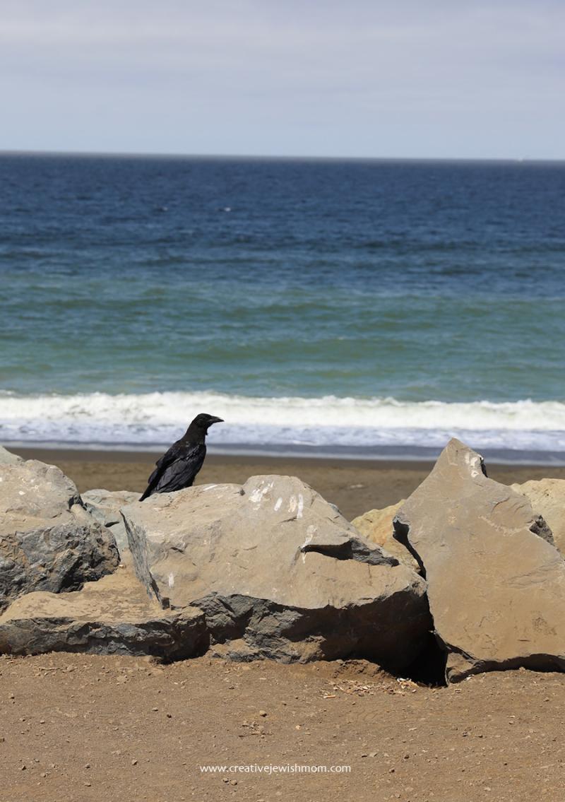 Pacifica-crow-at-mori-beach